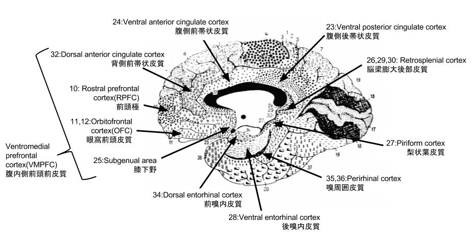 (ブロードマンの脳地図と主な領野, 大脳左半球内側面。)